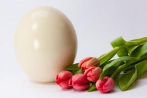 egg-spring-fruhlingsanfang-spring-awakening-easter